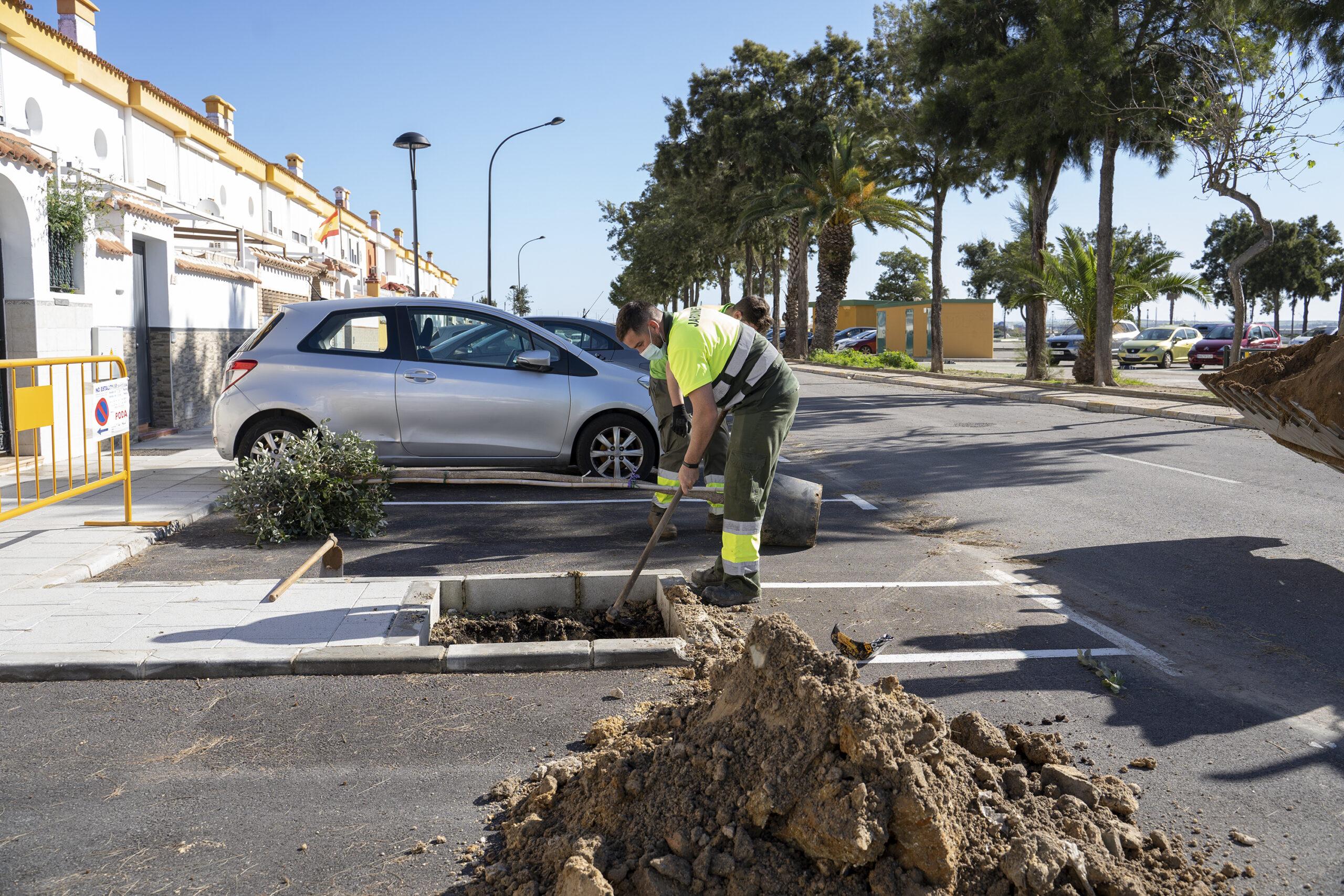 La calle Ruiz Miguel ya cuenta con arbolado